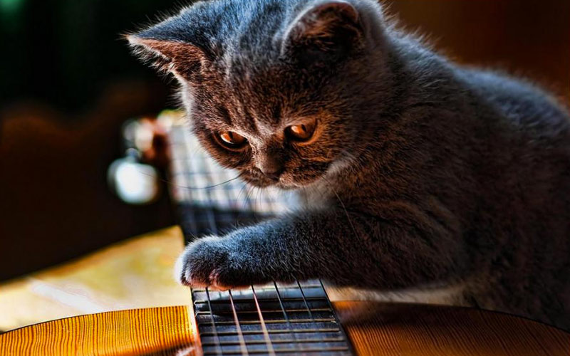 kitties08 30 способов использования котов в хозяйстве