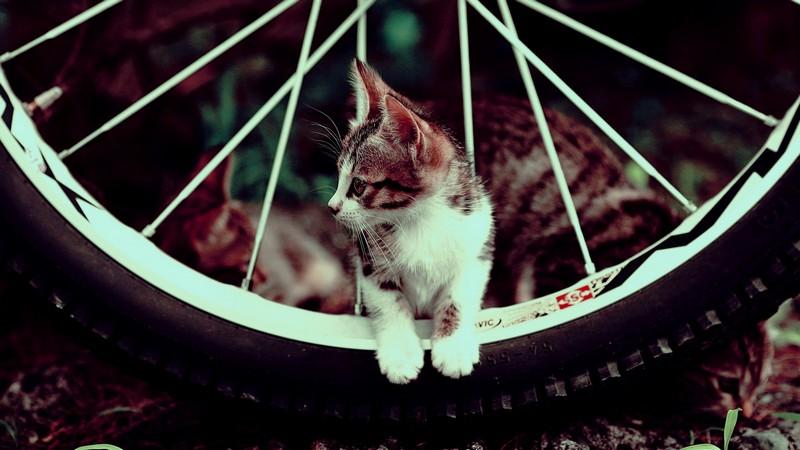 kitties09 30 способов использования котов в хозяйстве