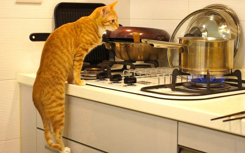 kitties12 30 способов использования котов в хозяйстве