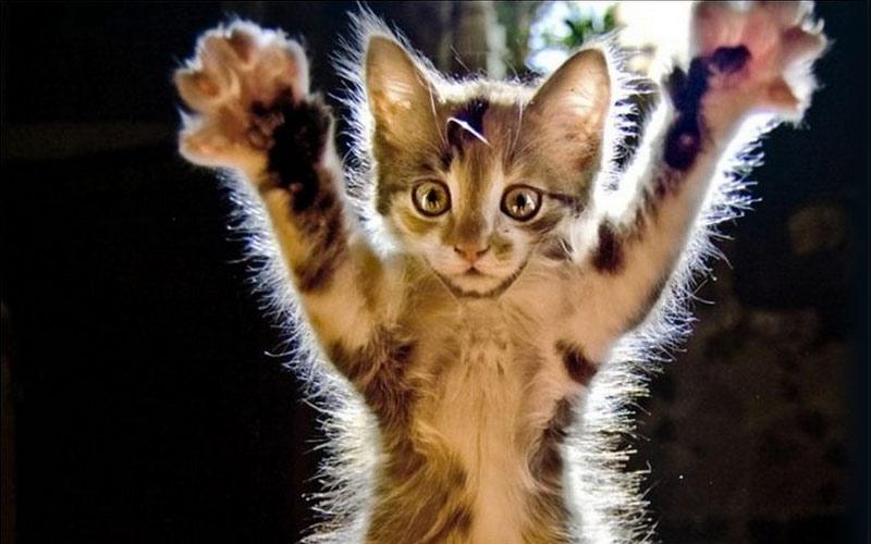 kitties17 30 способов использования котов в хозяйстве