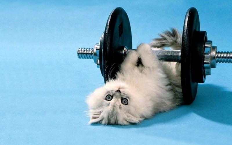 kitties18 30 способов использования котов в хозяйстве