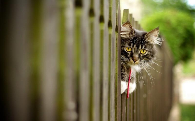 kitties22 30 способов использования котов в хозяйстве