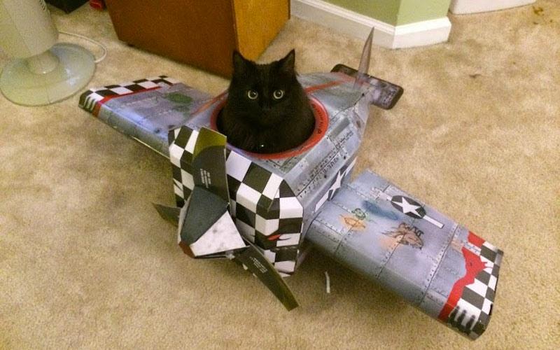 kitties28 30 способов использования котов в хозяйстве