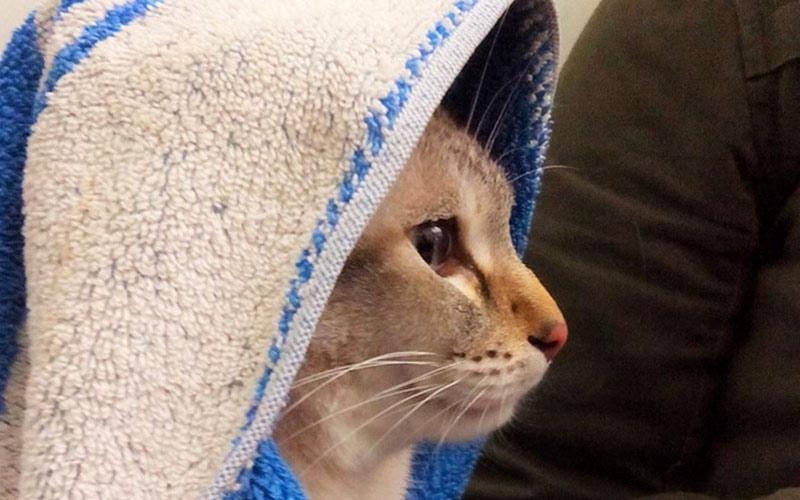 kitties29 30 способов использования котов в хозяйстве