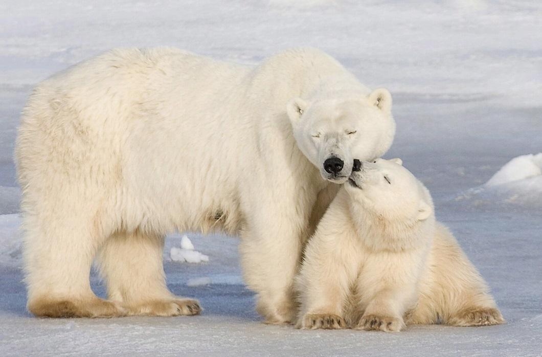 luchshie foto zhivotnyx oktyabr 1 Лучшие фотографии животных со всего мира за неделю