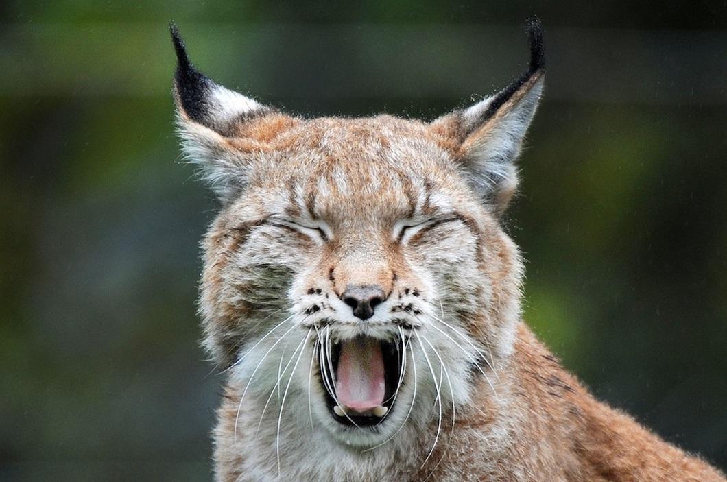 luchshie foto zhivotnyx oktyabr 2 Лучшие фотографии животных со всего мира за неделю