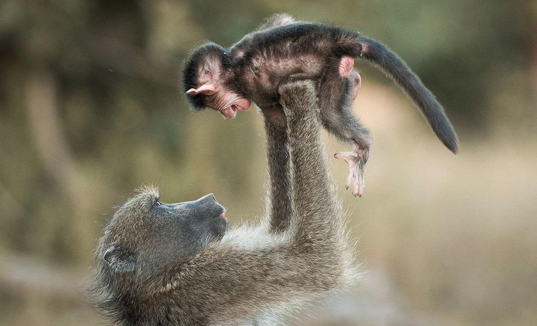 luchshie foto zhivotnyx oktyabr 5 Лучшие фотографии животных со всего мира за неделю