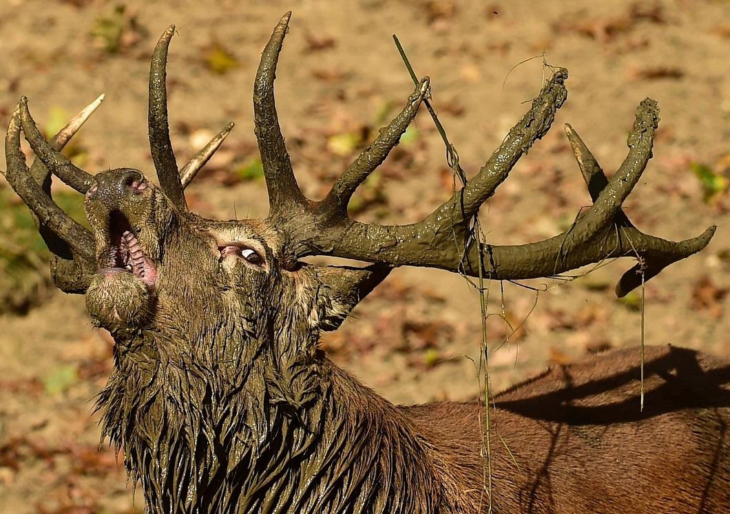 luchshie foto zhivotnyx za nedelyu v sente 1 Лучшие фотографии животных со всего мира за неделю