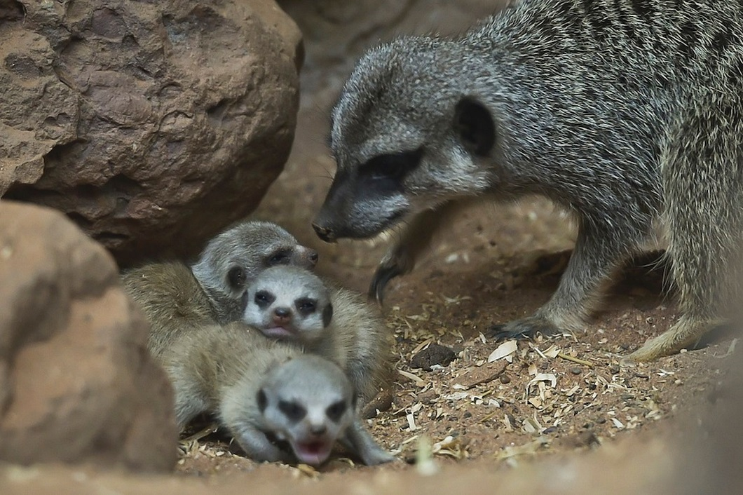luchshie foto zhivotnyx za nedelyu v sente 14 Лучшие фотографии животных со всего мира за неделю
