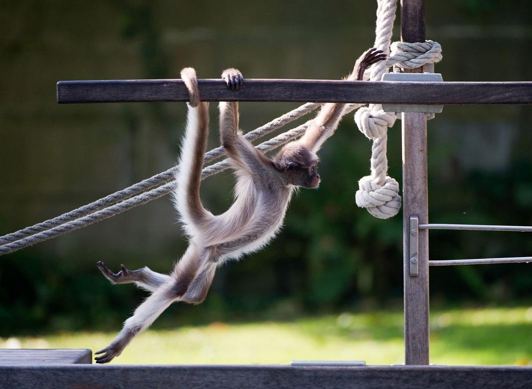 luchshie foto zhivotnyx za nedelyu v sente 2 Лучшие фотографии животных со всего мира за неделю