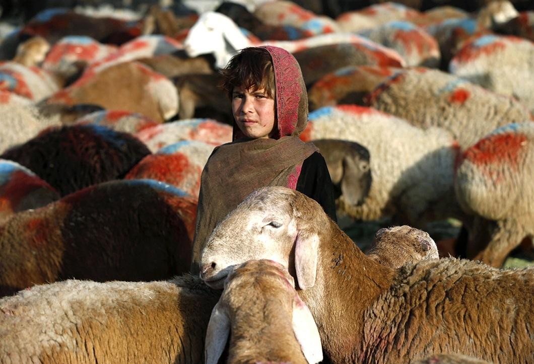 luchshie foto zhivotnyx za nedelyu v sente 5 Лучшие фотографии животных со всего мира за неделю
