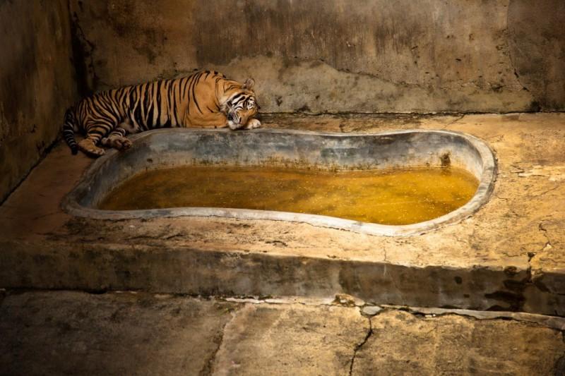 realzoolife02 800x533 Настоящая жизнь зверей в зоопарках