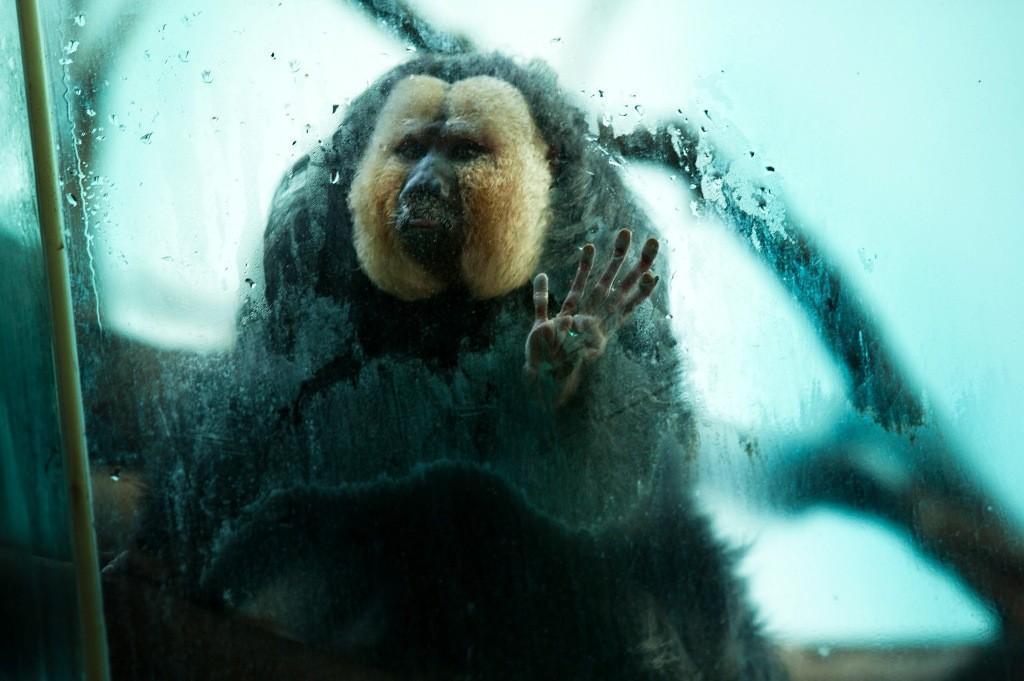 realzoolife04 Настоящая жизнь зверей в зоопарках