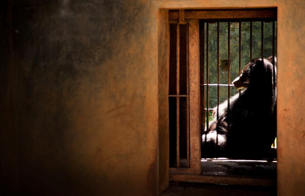 realzoolife05 Настоящая жизнь зверей в зоопарках