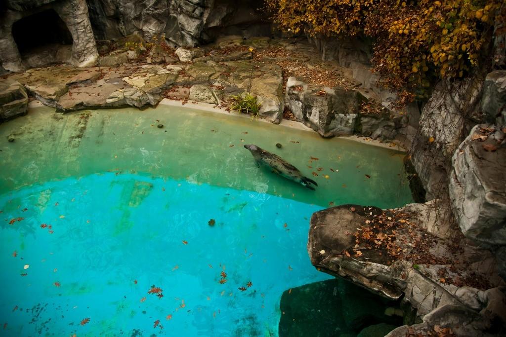 realzoolife08 Настоящая жизнь зверей в зоопарках