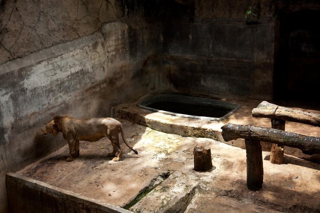 realzoolife12 Настоящая жизнь зверей в зоопарках