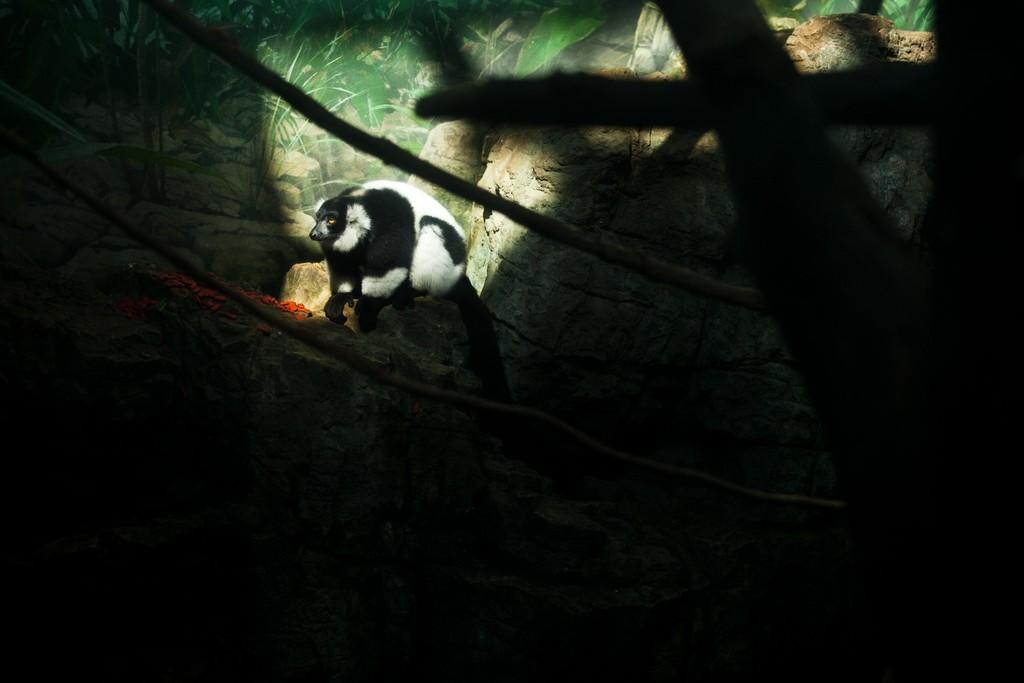 realzoolife13 Настоящая жизнь зверей в зоопарках