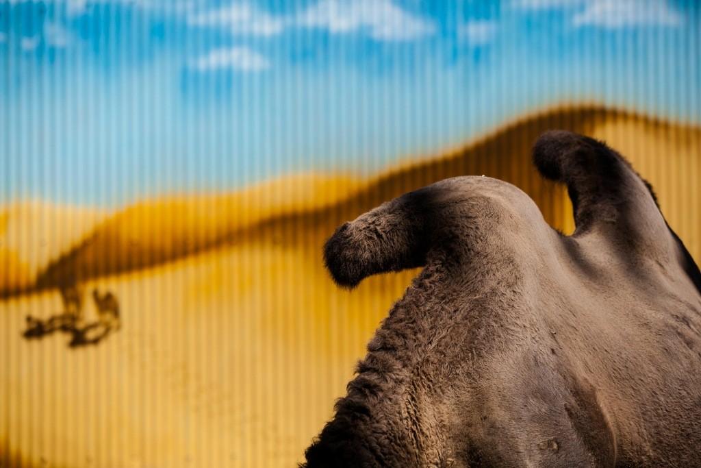 realzoolife15 Настоящая жизнь зверей в зоопарках