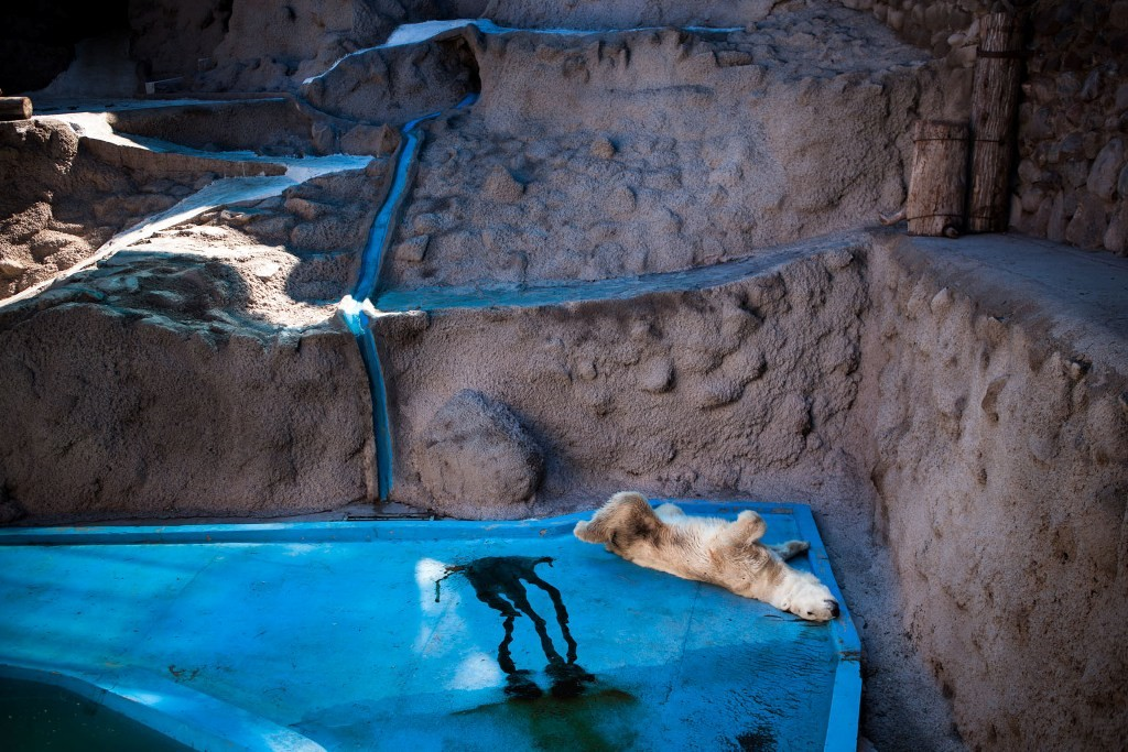 realzoolife17 Настоящая жизнь зверей в зоопарках