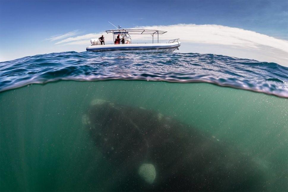 underwater02 Что скрывается под водой: 34 невероятные фотографии