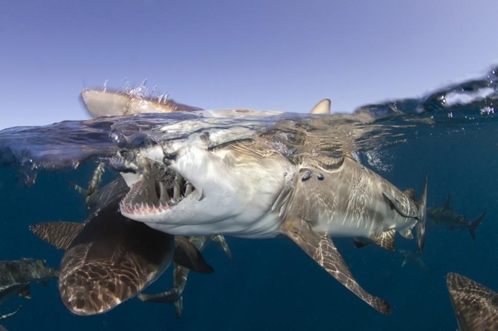 underwater04 Что скрывается под водой: 34 невероятные фотографии