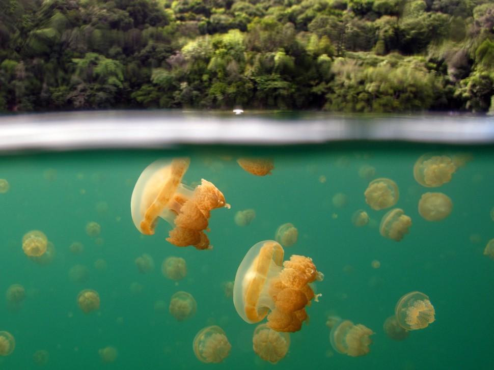 underwater07 Что скрывается под водой: 34 невероятные фотографии