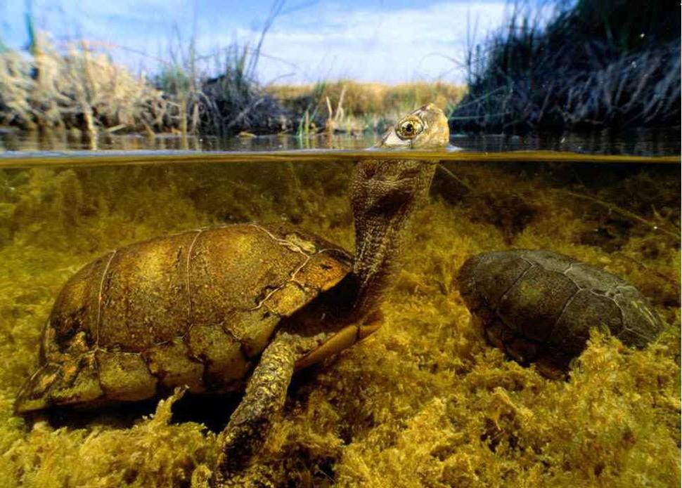 underwater09 Что скрывается под водой: 34 невероятные фотографии