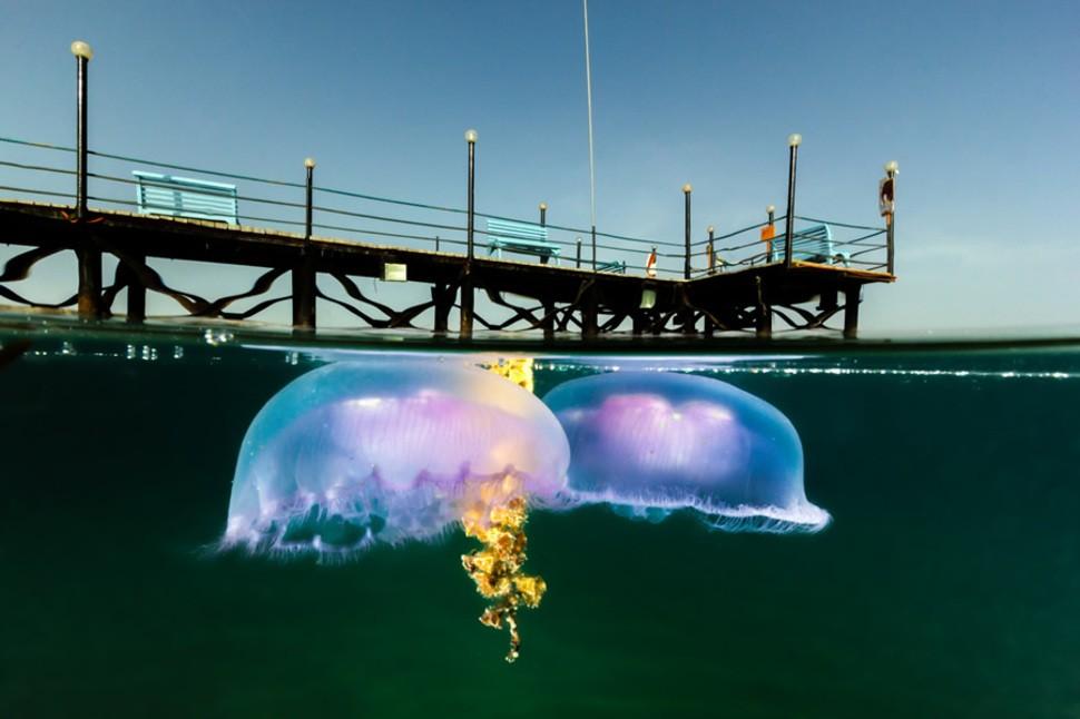 underwater11 Что скрывается под водой: 34 невероятные фотографии