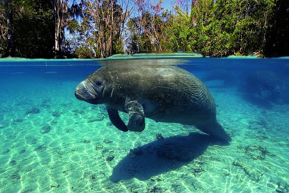 underwater15 Что скрывается под водой: 34 невероятные фотографии