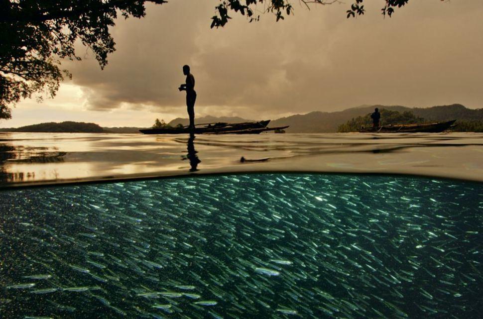 underwater16 Что скрывается под водой: 34 невероятные фотографии