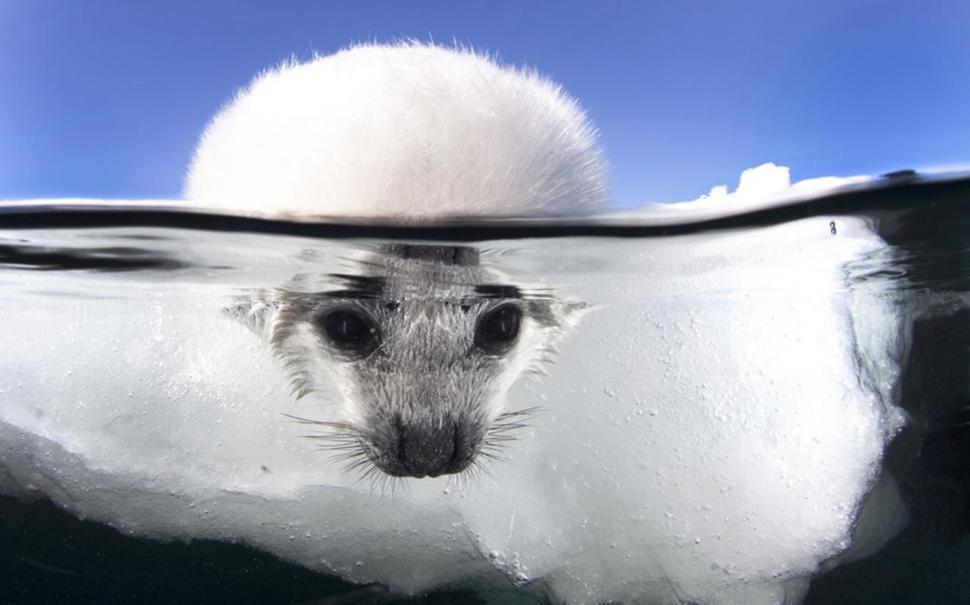 underwater18 Что скрывается под водой: 34 невероятные фотографии