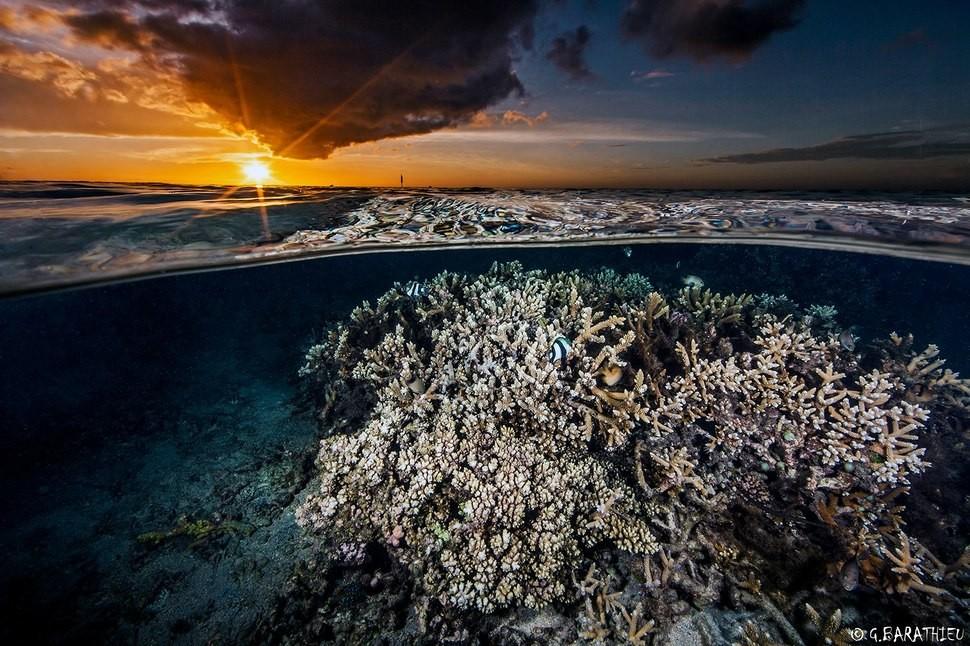 underwater19 Что скрывается под водой: 34 невероятные фотографии