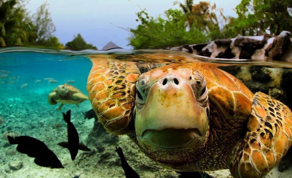underwater21 Что скрывается под водой: 34 невероятные фотографии