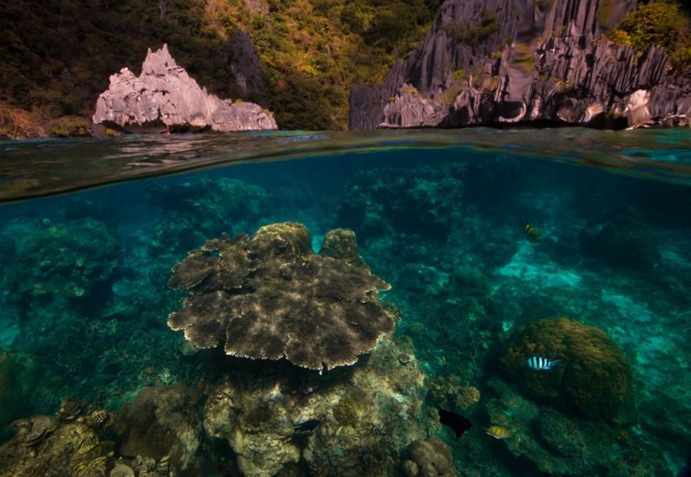 underwater26 Что скрывается под водой: 34 невероятные фотографии