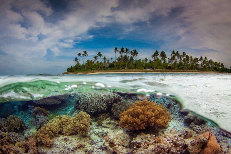 underwater30 Что скрывается под водой: 34 невероятные фотографии