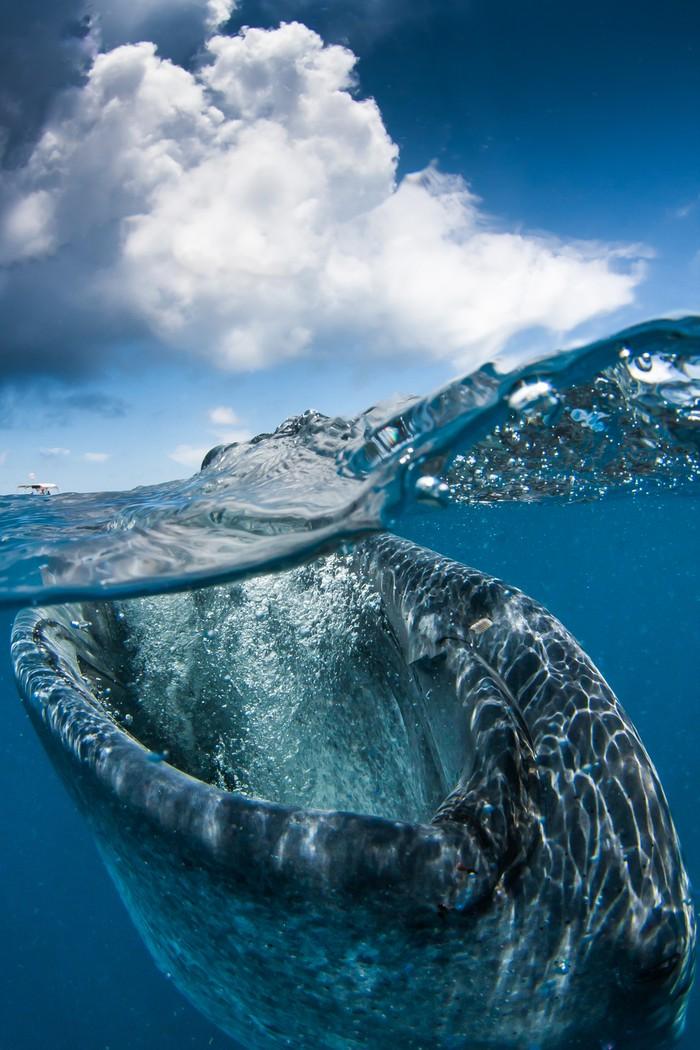 underwater31 Что скрывается под водой: 34 невероятные фотографии
