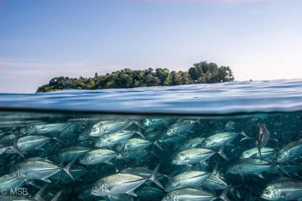 underwater34 Что скрывается под водой: 34 невероятные фотографии