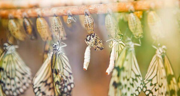 19 удивительных превращений гусениц в бабочек