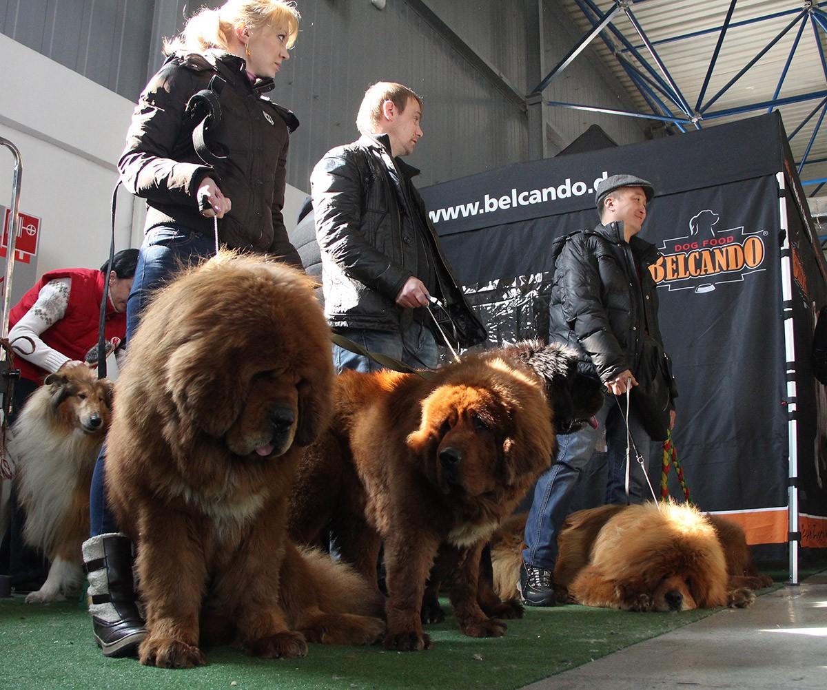 Gangsen04 Снежные львы: из Тибета в Казахстан