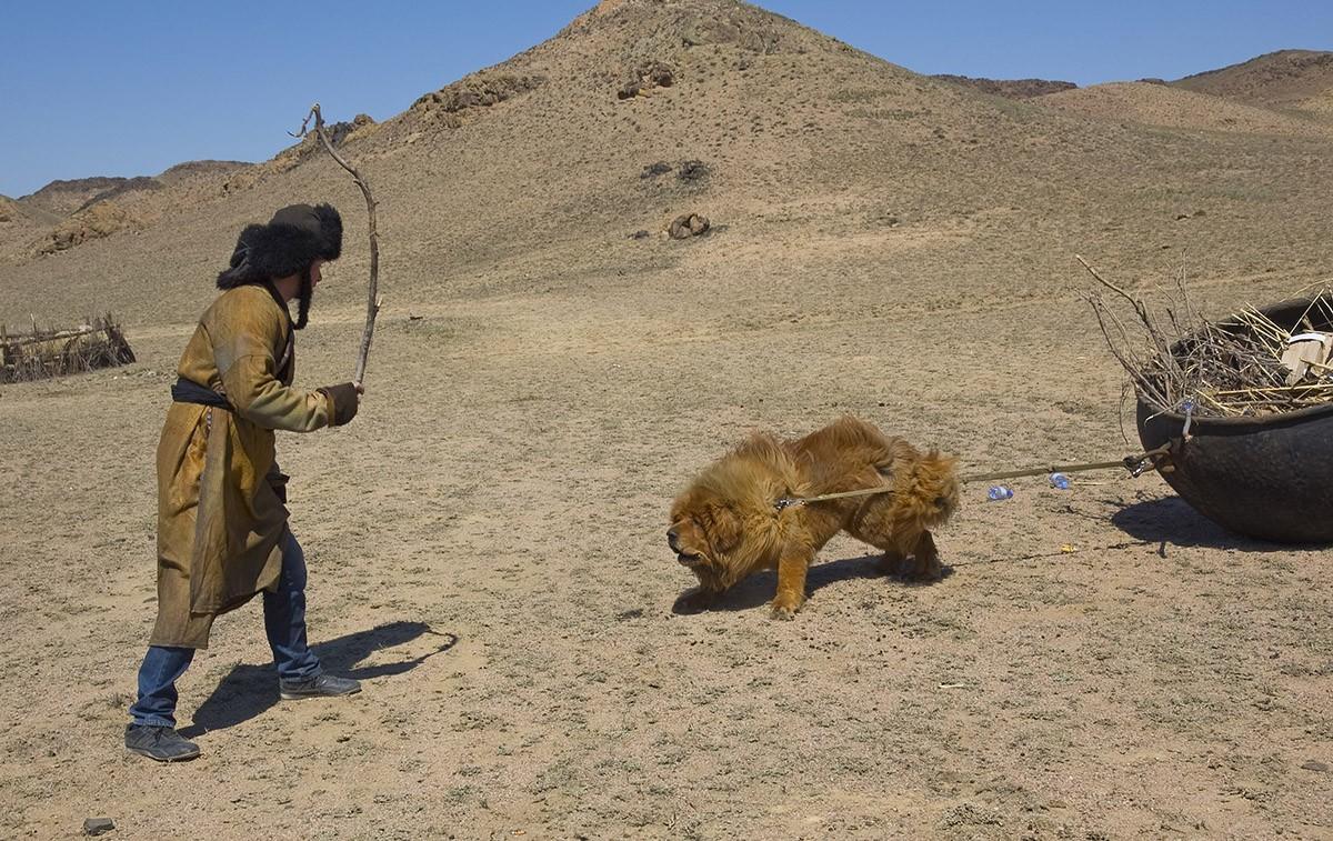 Gangsen06 Снежные львы: из Тибета в Казахстан