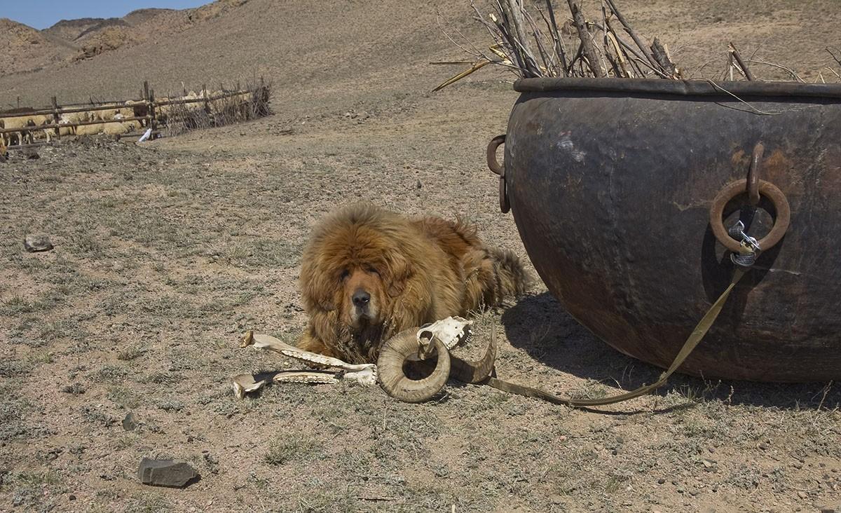 Gangsen08 Снежные львы: из Тибета в Казахстан