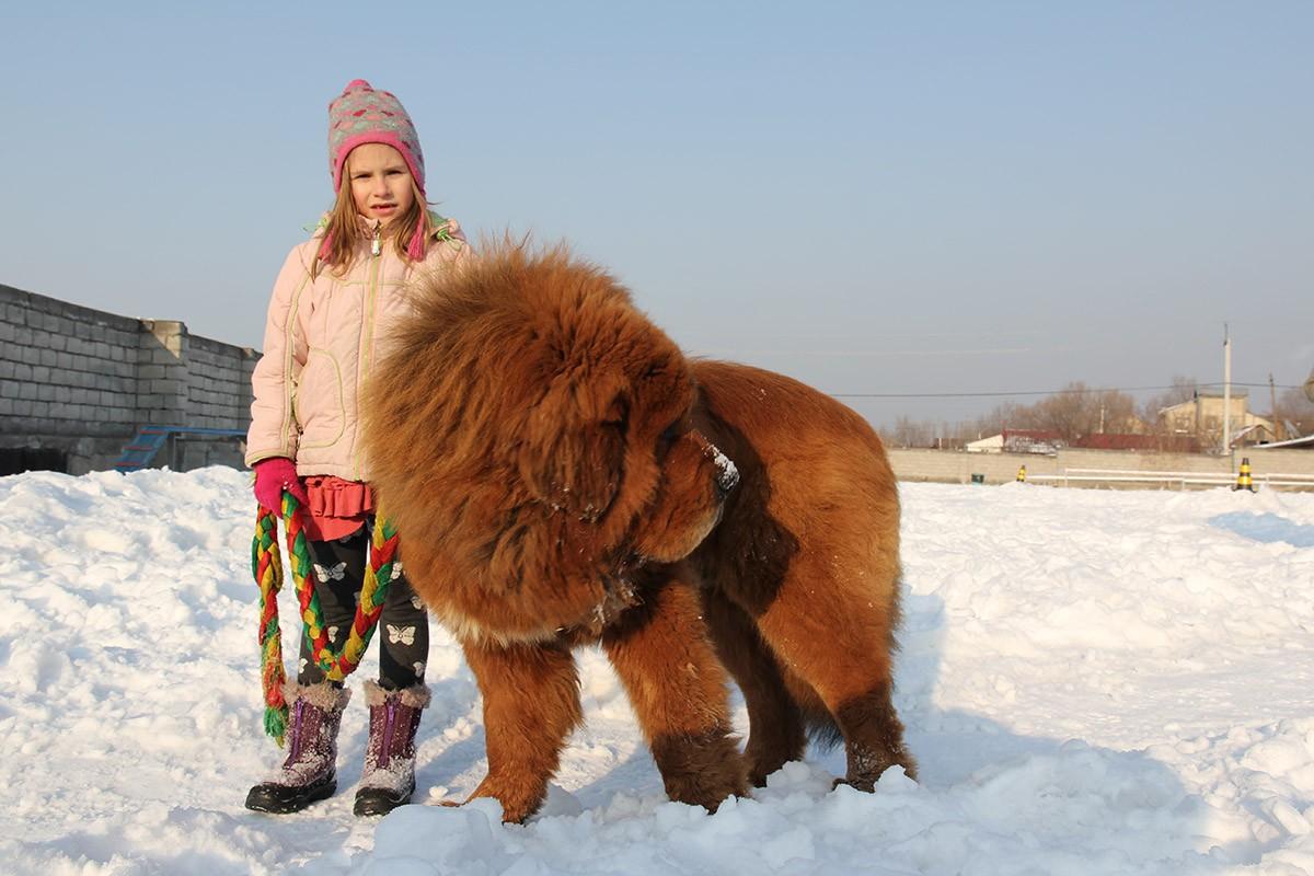Gangsen11 Снежные львы: из Тибета в Казахстан
