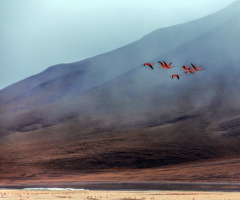 LagunaColorada14 Кровавая лагуна в Боливии