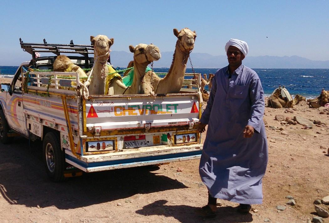 Sinai04 Синайскиий синдром Дахаб, удивительное место для зимовки