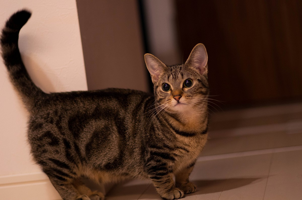 catbreeds02 Самые красивые породы кошек