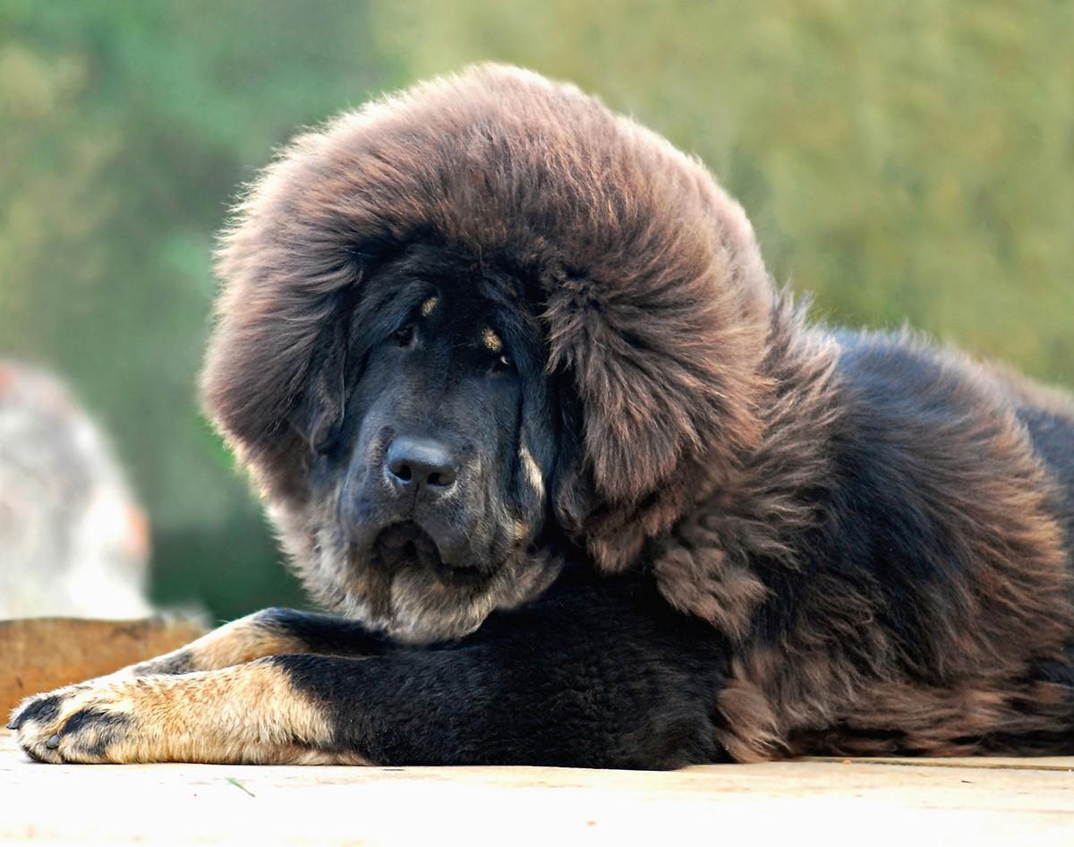 мусс самые дорогие животные в мире фото примерку заранее