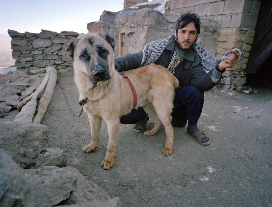 dogfight02 Азбука укуса: Шокирующие кадры собачьих боев