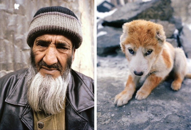 dogfight03 Азбука укуса: Шокирующие кадры собачьих боев