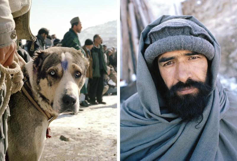 dogfight05 Азбука укуса: Шокирующие кадры собачьих боев