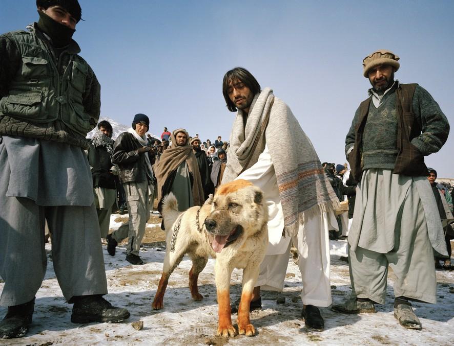 dogfight12 Азбука укуса: Шокирующие кадры собачьих боев
